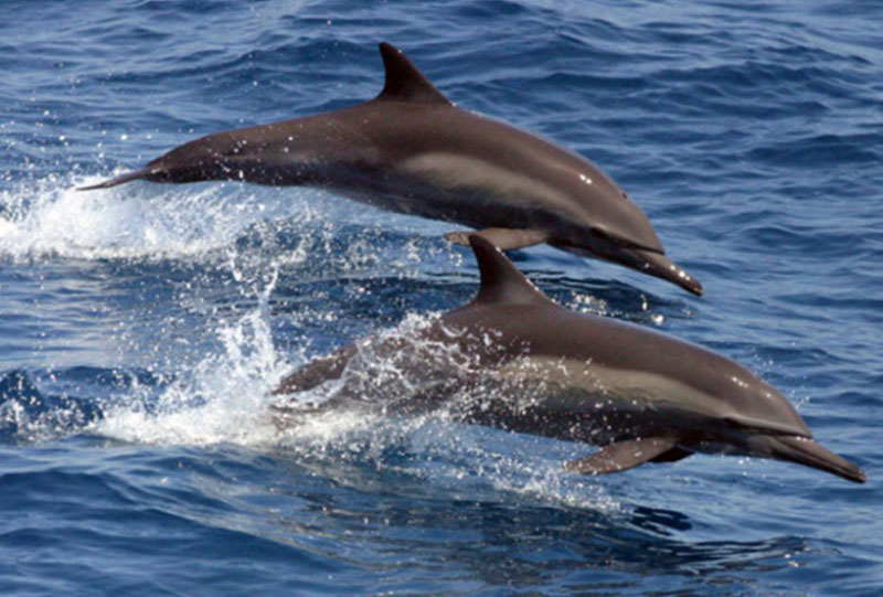 Five Battle Dolphins to Serve in Russian Navy